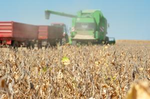 Sojabönor-skördas-på-stora-fält