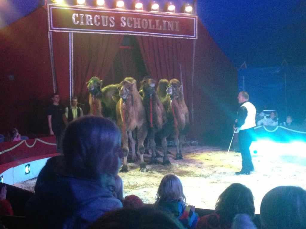 Cirkus Schollini i Gråbo