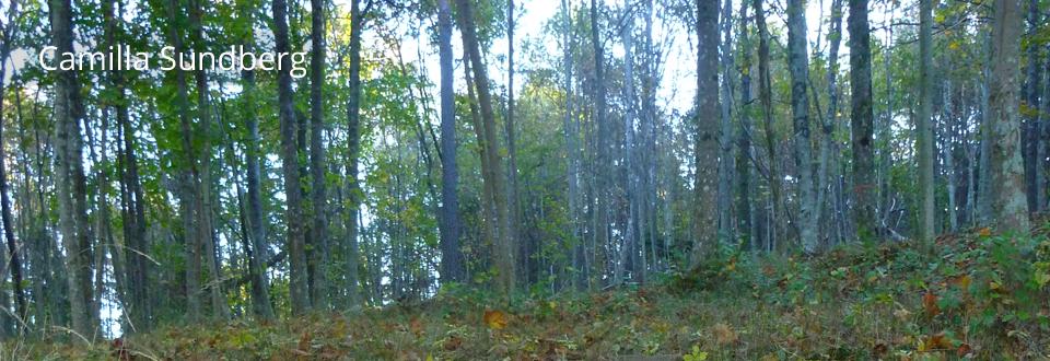 Vår i skogen - CamillaSundberg