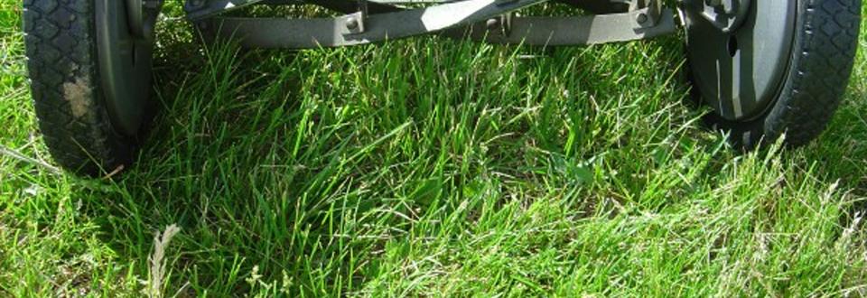 """""""Gräset är fortfarande grönare på andra sidan"""" av Erica Lektonius"""